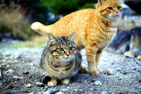 Technion analysts: Cats could help in development of anti-HIV drugs for humans