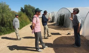 At the Arava greenhouse   Photo: Tania Susskind