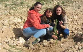 Australians planting in the Ramot Forest   Photo: Tania Susskind