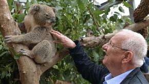 President Rivlin meets a koala